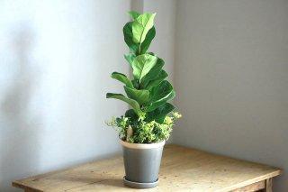 【1点もの】バンビーノの鉢植え(にょきっち人形付き)[B]