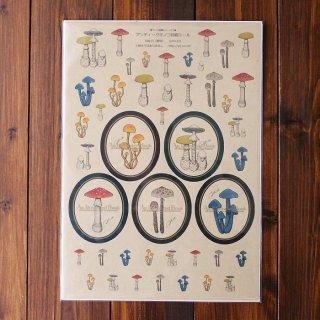 ●キノコ図鑑シリーズ2● アンティークキノコ図鑑シール