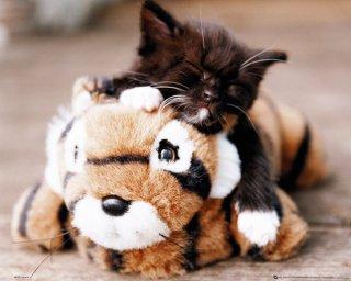 子猫とトラのぬいぐるみ ポスター(ミニサイズ)