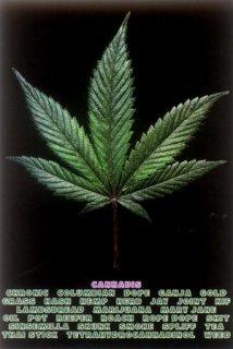 大麻 ポスター
