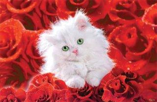 バラに包まれた子猫 ポスター