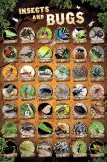 昆虫 ポスター