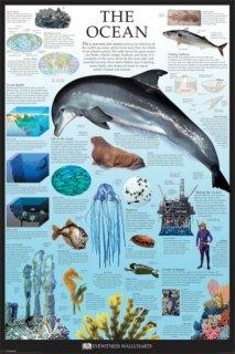 海洋 図解 ポスター