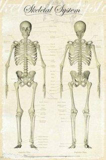骨格図 ポスター
