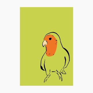 IROTORIDORI ポストカード(コザクラインコ)
