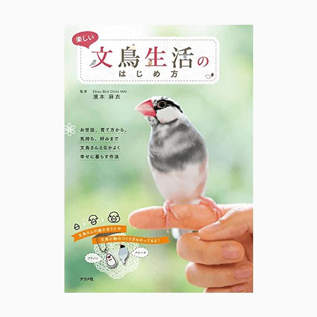 楽しい文鳥生活のはじめ方