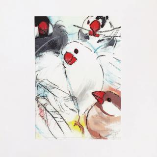 オクムラミチヨ A5クリアファイル(Angel -文鳥-)