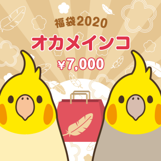 金の福袋2020(オカメインコ)