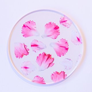 carnation coaster set a