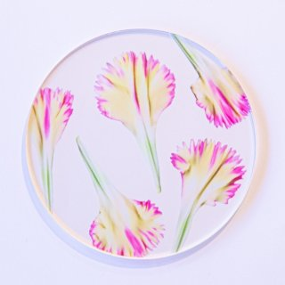 carnation coaster set b